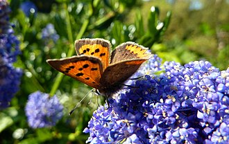 Paignton Zoo - A butterfly in the wildlife garden