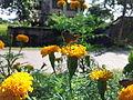 Butterfly sitting on a flower.jpg