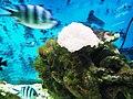 Cá biển Nha Trang 5.jpg