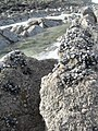 Côte Opale - panoramio (9).jpg