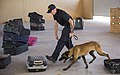 CBP Canine Training Facility El Paso Texas (28305817242).jpg