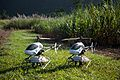 CSIRO ScienceImage 2348 Two Project ResQu helicopters.jpg
