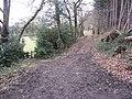 Cadman Wood - Footpath Junction - geograph.org.uk - 1166913.jpg