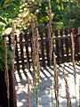 Calamagrostis epigejos-(dkrb)-6.jpg