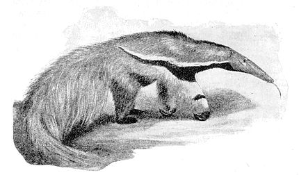 Cambridge Natural History Mammalia Fig 091.jpg