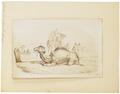 Camelus dromedarius - 1700-1880 - Print - Iconographia Zoologica - Special Collections University of Amsterdam - UBA01 IZ21600065.tif
