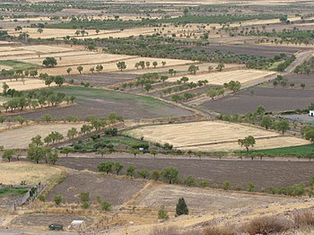 Dryland farming - Wikipedia