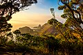 Cape schanck looking towards pulpit rock at dawn.jpg