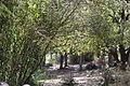 Carmel Park. Khik Wadi IMG 8907.JPG
