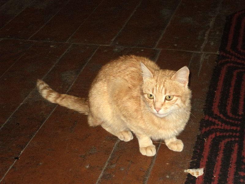 Blonde Cat Nude Photos 84