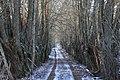 Ceļš ar veciem vītoliem gar malu.The road with the old willows along the edge - panoramio.jpg