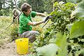 Charity receives bumper crop of aid from Arlington House garden 140919-D-CD772-001.jpg