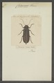 Chiasmus - Print - Iconographia Zoologica - Special Collections University of Amsterdam - UBAINV0274 032 04 0068.tif