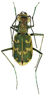 species of insect