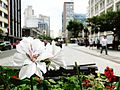 Cidade de Curitiba - Brazil by Augusto Janiski Junior - Flickr - AUGUSTO JANISKI JUNIOR (6).jpg