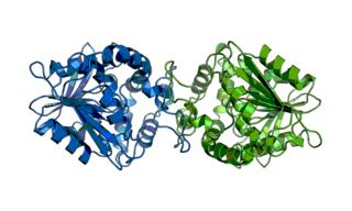 CFTR inhibitory factor