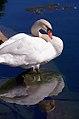 """Cincinnati - Spring Grove Cemetery & Arboretum """"Swan Reflecting"""" (3933065740).jpg"""