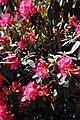 City of London Cemetery flowering shrub 5.jpg