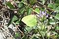 Cleopatra (Olive grove MakGi) (35112982004).jpg
