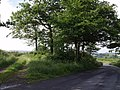 Clump of trees near Bratton Clovelly - geograph.org.uk - 468231.jpg