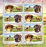 Collie-and-German-Shepherd.jpg