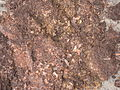 Compost of a UDDT after 6 months of drying (8139714589).jpg