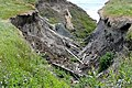 Compton Chine - geograph.org.uk - 1380416.jpg