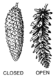 Cone (PSF).png