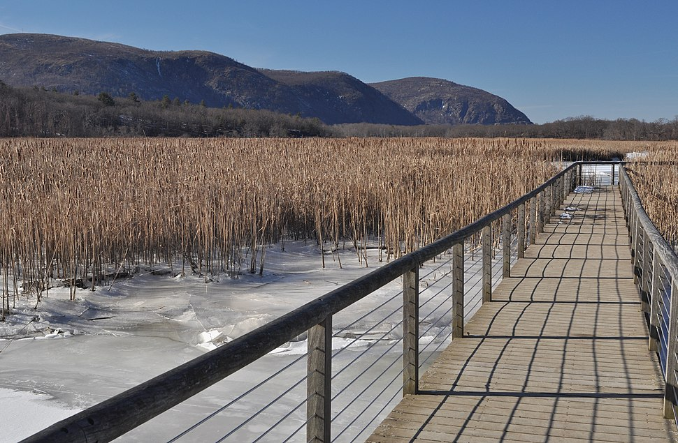 Constitution Marsh boardwalk winter