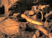 Fichier: L'équipe de construction déterre les fossiles de la période glaciaire.ogv