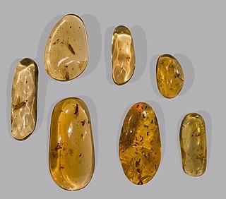 "Copal resinous substances between ""gummier"" resins and amber"