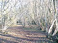 Coppice by Bisney Cottage - geograph.org.uk - 1096676.jpg