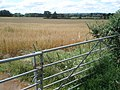 Corn field near Webbhouse Farm - geograph.org.uk - 500282.jpg