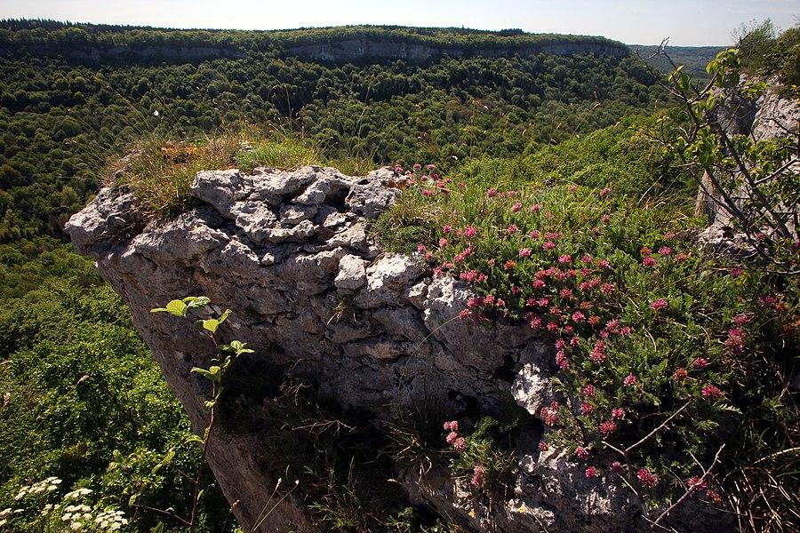 La corniche calcaire du ravin de Valbois est colorée en rose par les fleurs d'Anthyllide des montagnes (Anthyllis montana).