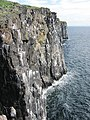 Crags, Isle of May - geograph.org.uk - 2078130.jpg