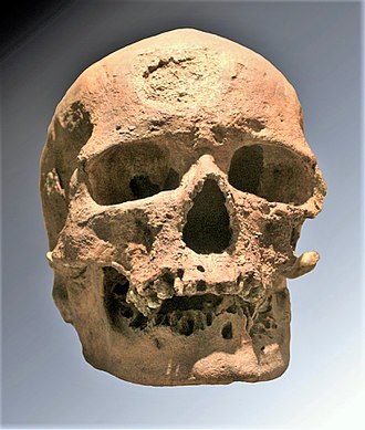 "Caucasian race - The original ""Old man of Crô-Magnon"", Musée de l'Homme, Paris"