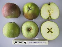 Cross section of Christie Manson, National Fruit Collection (acc. 2000-025).jpg
