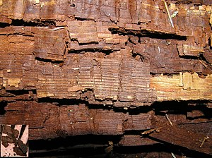 Wood-decay fungus - Cubical brown rot on oak