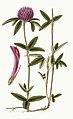 Curtis's botanical magazine (Plate 2779) (8611180956).jpg
