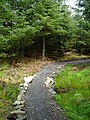 Cycle Trail in Kirroughtree Forest - geograph.org.uk - 431776.jpg