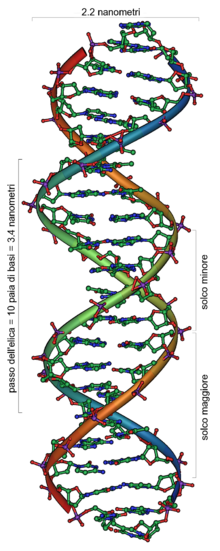 DNA Overview it.png