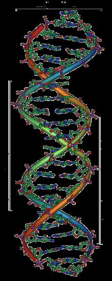 Filamento di DNA