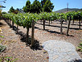 DSC28068, Chateau Julien Winery, Carmel, California, USA (5170979624).jpg