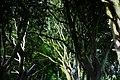 Dark Hedges, Nordirland, Bild 2.jpg