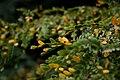 Deer Park Yellow Green Leaves.jpg