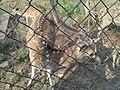 Deer Park at Kinnerasani Dam, Khammam, Telangana State 12.jpg