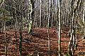 Deisenhofener Forst Roemerstrasse Via Julia Lanzenhaar-2.jpg
