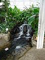 Dentro da Estufa do Jardim Botânico de Curitiba (2).jpg