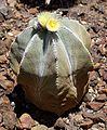 Desert Botanical Gardens 6-7 (23033474302).jpg