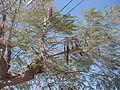 Desert plants 48.JPG